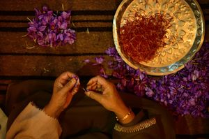 Picture of saffron flowers while being processed at home.
