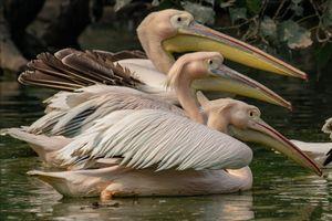 National Zoological Park, New Delhi