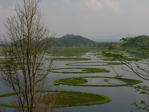 Keibul Lamjao National Park 1/undefined by Tripoto