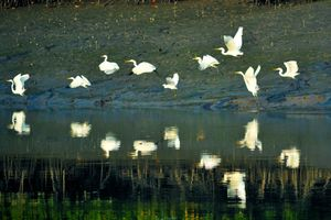 Sundarbans National Park 1/undefined by Tripoto