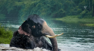 Kodanad Elephant Interaction 1/undefined by Tripoto