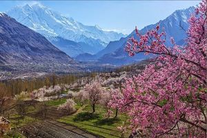 Hunza Gojal Valley Cherry Blossom Tour