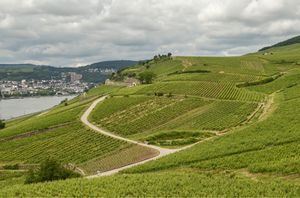Germany - Day Trip toRudesheim am Rhine