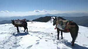 Brahmatal Lake Winter Trek – The Pristine White Beauty #offbeatuttarakhand
