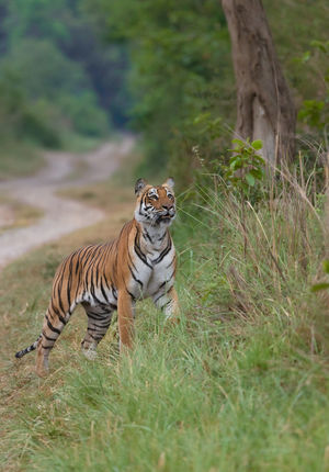 Jim Corbett National Park: A jungle with whom you will fall in love
