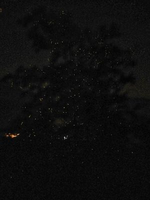 Fireflies Festival at Bhandardara