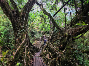 Trek to Double Decker Living Root Bridges to Rainbow Falls