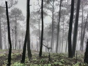 Shimla in monsoon