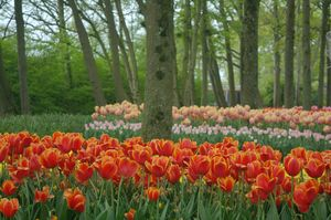 Bewitching beauty of the Tulip Garden