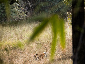 Bandhavgarh| The Tiger Territory
