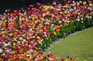 A day trip to Tulip Garden , Amsterdam