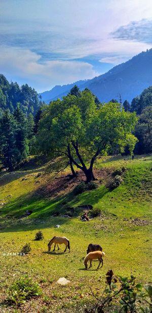 Kashmir the land of beauty, love and hospitality.