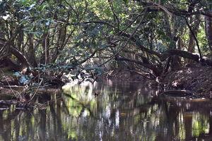 Last spring in Kerala