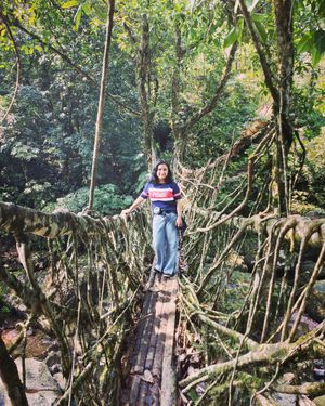 Meghalaya's most famous living root bridges! Yet unknown among Indians.