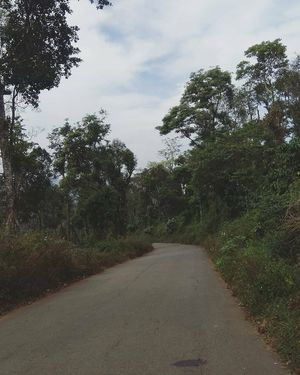 How I traveled solo in Coorg for the first time