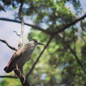 Zoo @Surabaya