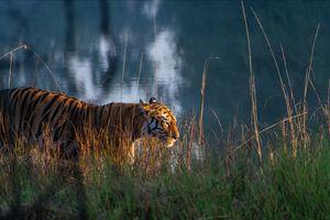 Tadoba Tiger Tales (TTT)
