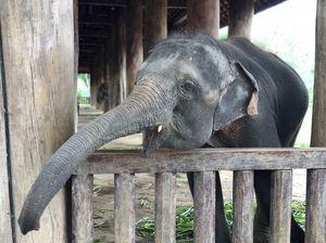 Budget Trip To Laos