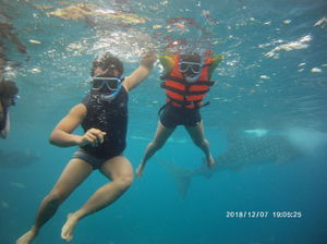 Swimming with Whale Shark - Oslob, Philippines