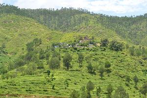 Drive through Hills of Uttrakhand