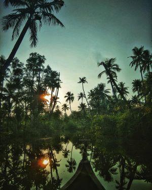 Munroe Island - A solo Woman Trip to the Hidden Lush Green Treasure of Kerala
