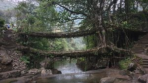 3700 one side stairs trek- Double Decker Living Root Bridge.