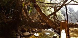 Living root bridge #northeastphotos