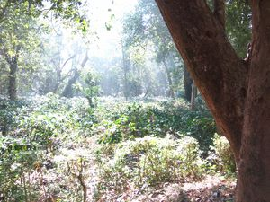 Away from the world Into Deep Jungles..Maredumilli