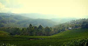 Munnar and the mist