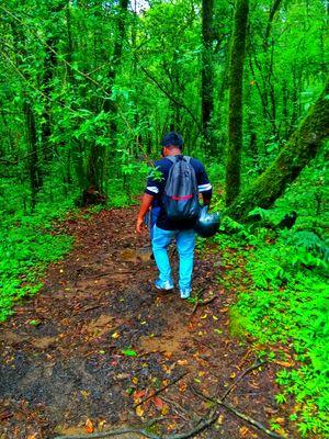 Mawphlang Sacred Grooves, Meghalaya #northeastphotos#meghalaya#nature#india #northeast#forest