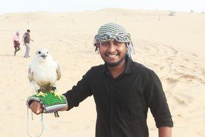 The desert safari,dubai