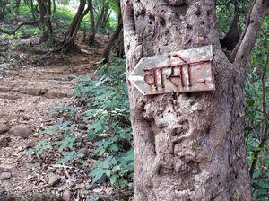 The Famous Jungle Trek- Maharashtra- Vasota