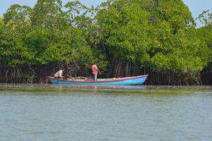 Insider's view of Pichavaram: World's 2nd largest Mangrove.