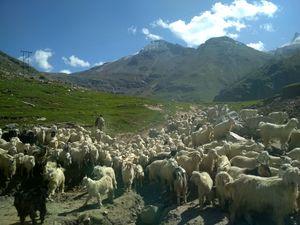 Beyond Rohtang Pass - Lahaul.