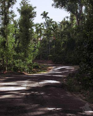 Road to Irupu, Kodagu, Coorg, Karnataka