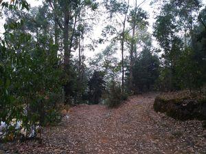 A Day in Nilgiri Mountains