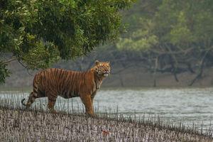 इनके गायब होने से पहले घूम आइए भारत की ये 5 प्यारी जगहें