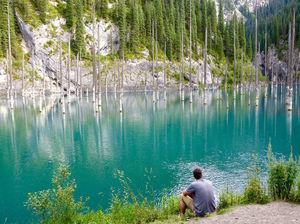 झील में समाया अनोखा जंगल जहाँ पानी के नीचे उगते हैं पेड़, वो भी उल्टे!