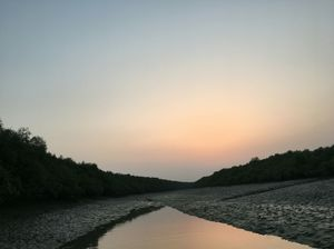 the unexploited SUNDERBANS,    something more than spotting the great bengal tiger