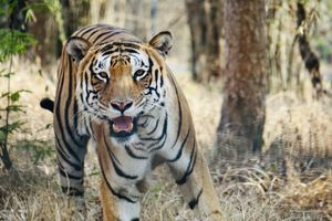 Guide to Wildlife Safari in Bannerghatta National Park!