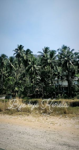 Instant SOLO Trip - Kerala