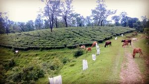 Upper Assam a real unexplored treat!