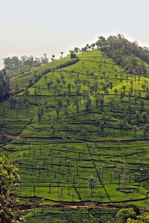 Not Munnar - Here's your perfect Hill Station in South.! #notinnorth