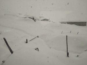 "Chopta "" A Snow Devil"" , Auli Rejoice⛷️"