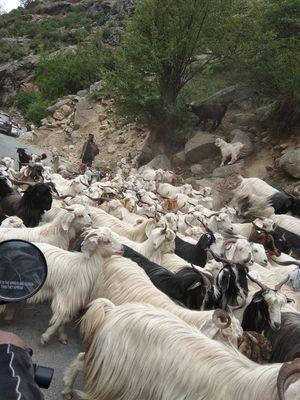 Solo Bikeride to Shimla-Chitkul last village of India-Spiti Valley-Kaza-Rohtang Pass-Manali