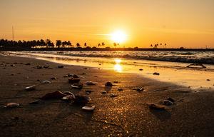 ????Coconut Island ????..... !!!! Mangalore diaries ????
