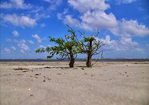 Henry Island &Bakkhali