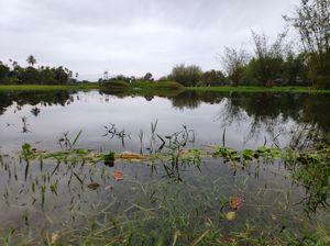 Jalpaiguri Landscape in March