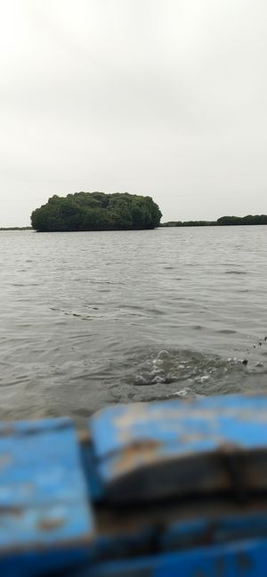 It's a mangrove forest which covers 5000acres and a good place to visit . . .we can get in on boats