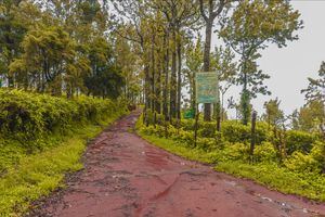 Nelliyampathy is a hill station situated in palakkad district. Best time to visit is during monsoon.